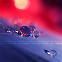 Sunrise Dew by Irrence