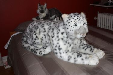 Life Size Snow Leopard plush by dapumakat