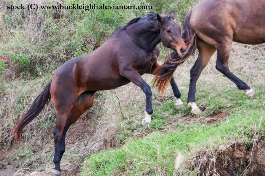 Bay horse jump leap stock by buckleighh