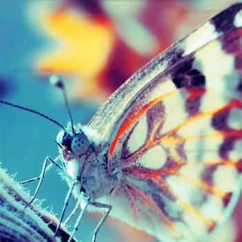 Butterfly. .. by light-from-Emirates