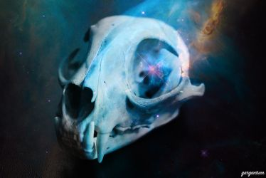 Out Of This World Skull by gargantuen