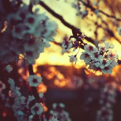 spring light by BaxiaArt
