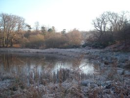 frozen lake at deer park by loobyloukitty