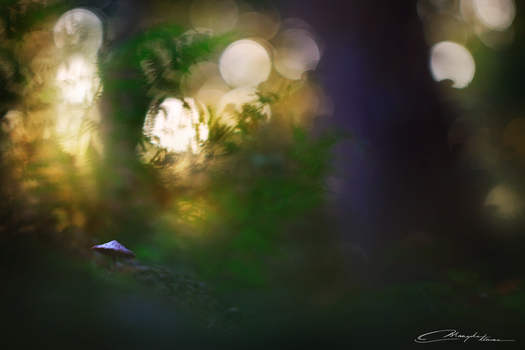Mushroom of the forest by MaaykeKlaver