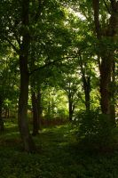 Sacred Forest 2 by CAStock