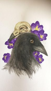 A Crow and its Skull by shadow21812