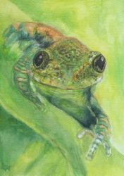 Rainforest frog by Witlart
