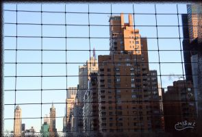 Window or Reflection by gilonm