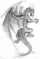 More dragons by Canyx