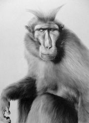 Mohican monkey by CubistPanther