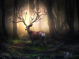 Forest deer by ElenaDudina