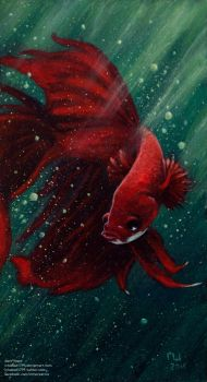 Fighter Fish Acrylic by ichabod1799