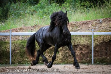 E Friesian big trot front side view by Chunga-Stock