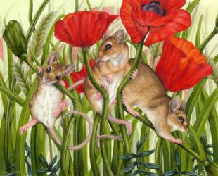 Field Mice in a Poppy Field by BloodhoundOmega