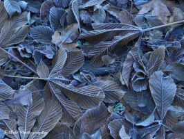 Frozen Leaf Cover by sweir17