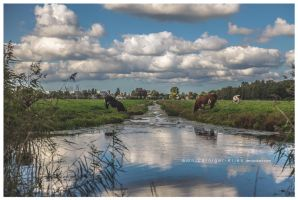 dutch scenery III by corniger-aries