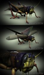 Gregarious Locust A by GeneralSoundwave