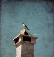 Seagull on the top by LolaCraven