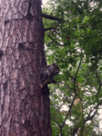 Squirrel Gets High by longy909