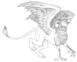 Griffon by lims