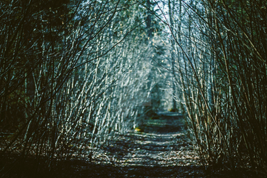 In the woods somewhere