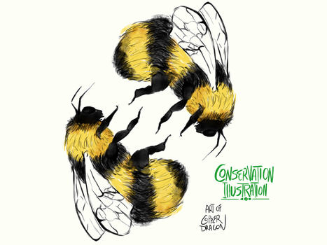 Conservation Illustration Project - Bumblebee by copperdragons