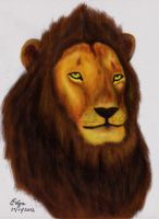 Real Lion King by Evgra