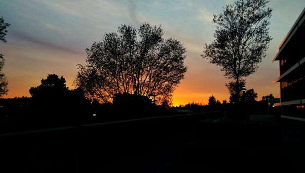 Sunset Spot: sky fire thru the trees by LordPint