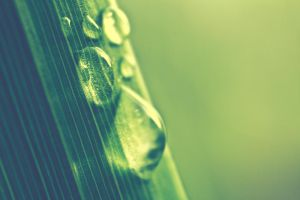 Drops On Grass by Linna89