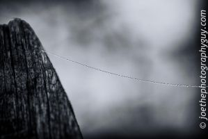 Dew on a Strand of Web by jwdonley