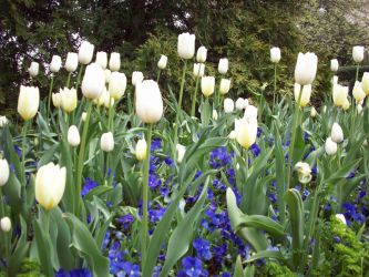 Spring Flowers 13 by TexelGirl-Stock