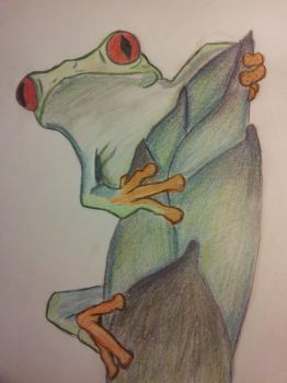 red eye frog color by nadinedavid