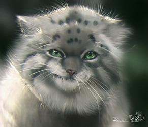 Pallas Cat by Chanrom