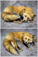 'Sulky' the Red Fox Soft Mount by WeirdCityTaxidermy