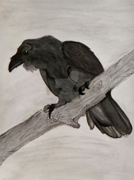 Raven '0_0' by Captain-Wolfang