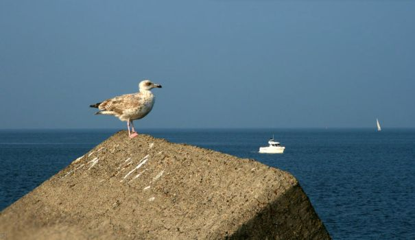 SEAGULL 2 by scifilicious