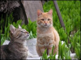 734 by evy-and-cats