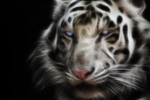 White Tiger by mceric
