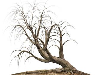 Trees 16 PNG Stock by Roy3D