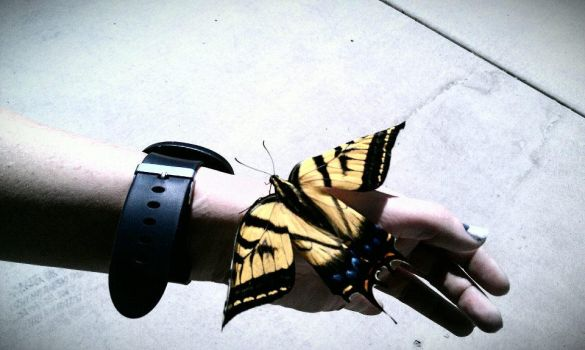 Butterfly1 by Bougeant