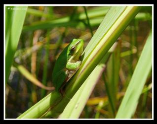 Thats Mr Frog To You by BreeSpawn