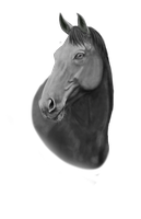 Headshot Grayscale by Valanee