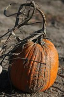 Pumpkin by JennL-Stock