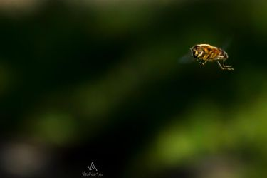 Yellow Fly flying in green by VitoDesArts