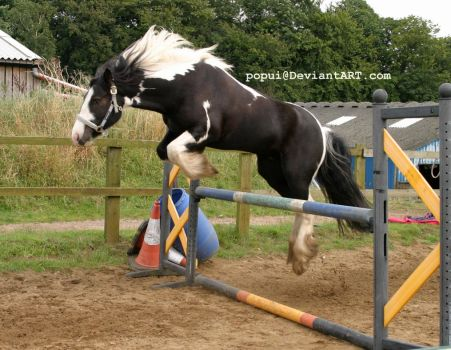 Piebald horse jumping9_stock by popui