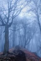 foggy autumn forest by edinaB