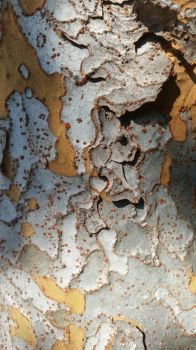 Cool Bark texture stock 1 by E1L0n3wy