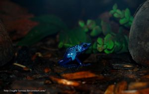 Poison Dart Frog by Night-Lioness