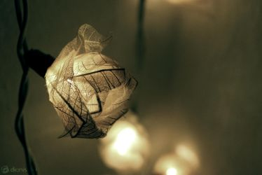 Fragile light by DionisDei