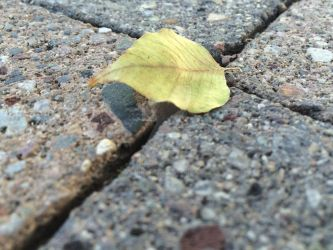Leaf at the Cross Roads by DawnTheADHH1655